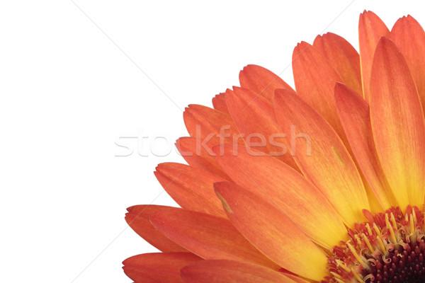 цветок макроса фото Focus изолированный Сток-фото © frescomovie