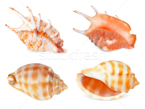 Set of Seashell Stock photo © frescomovie