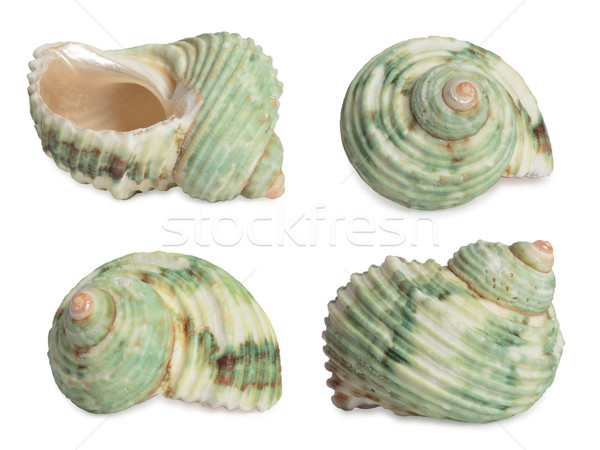 Mare shell set conchiglie alto rendering 3d Foto d'archivio © frescomovie