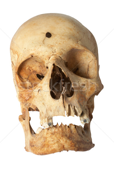 Human skull Stock photo © frescomovie