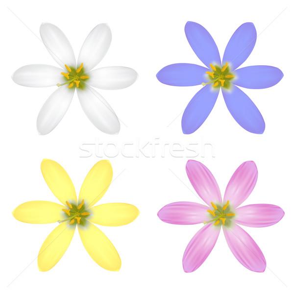 Basic RGB Stock photo © frescomovie