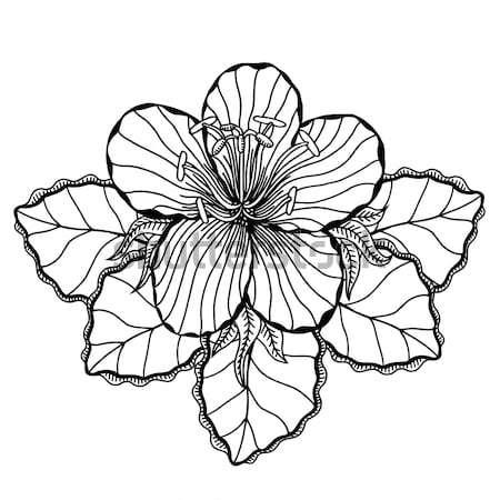 Zwart wit bloem voorjaar ontwerp blad Stockfoto © frescomovie