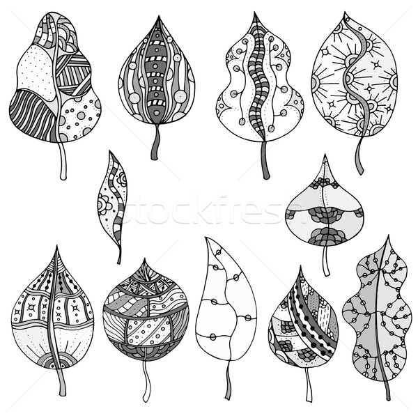 Forest leaves. Vector.  Stock photo © frescomovie
