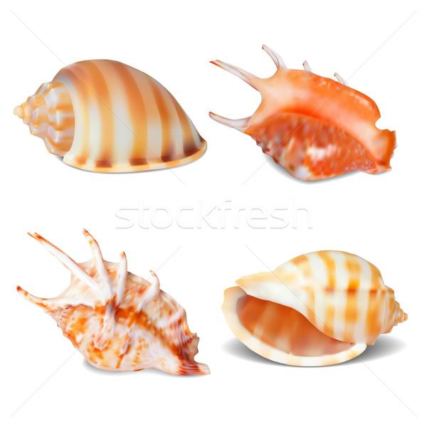 Set of Seashell Stock photo © frescomovie