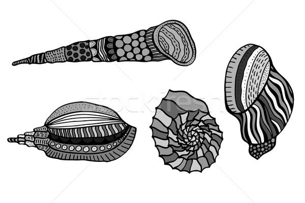 Conjunto conchas aquático rabisco esboço Foto stock © frescomovie