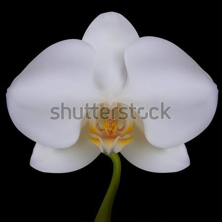 Witte bloem orchidee geïsoleerd zwart wit bloem zwarte Stockfoto © frescomovie