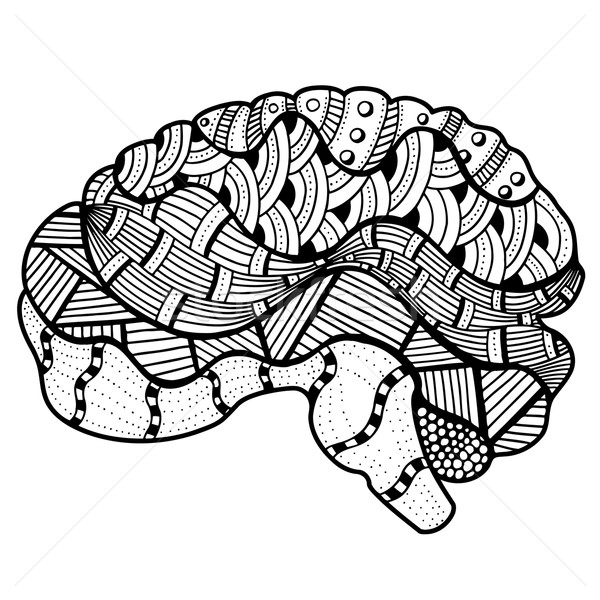 Human Brain doodle Stock photo © frescomovie