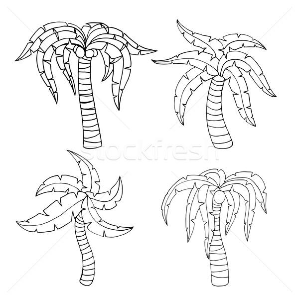 Palm Tree Vector Illustration C Volodymyr Vechirnii Frescomovie