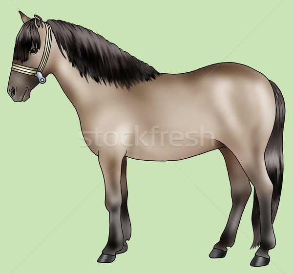 Pony breeds: Sorraia Stock photo © fresh_7266481