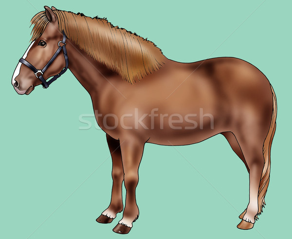 Poney Islande illustration réaliste style art Photo stock © fresh_7266481