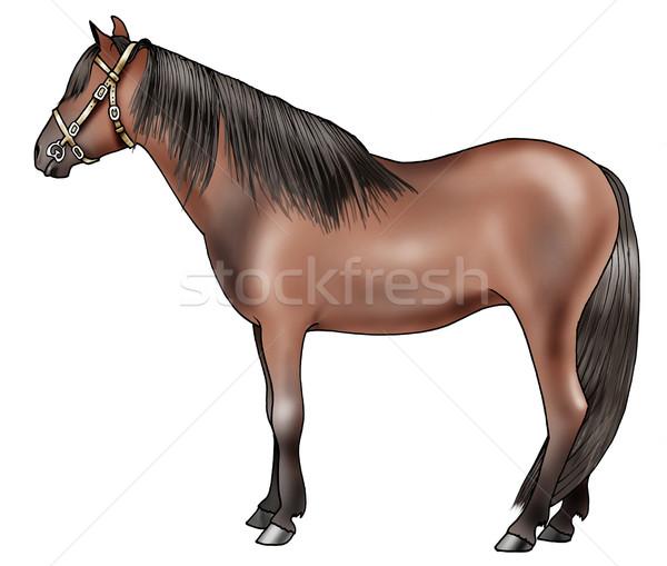 Pony breeds: Caspian Stock photo © fresh_7266481