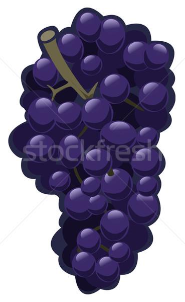 Druiven illustratie paars witte geïsoleerd object Stockfoto © fresh_7266481