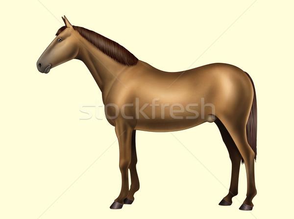 Cavallo anatomia parti del corpo no testo illustrazione digitale Foto d'archivio © fresh_7266481