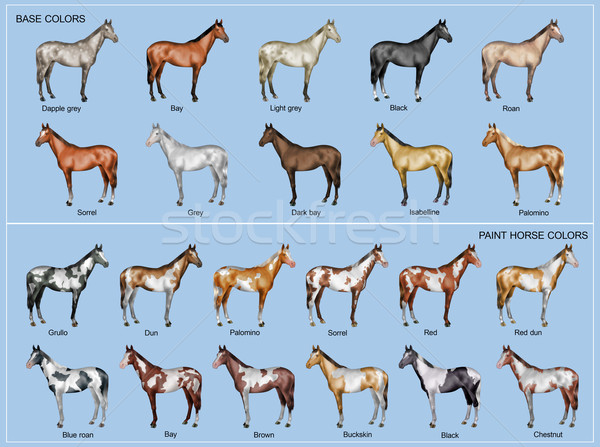 Horse color chart Stock photo © fresh_7266481