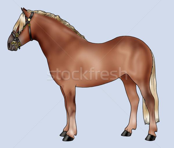 Pony breeds: Haflinger Stock photo © fresh_7266481