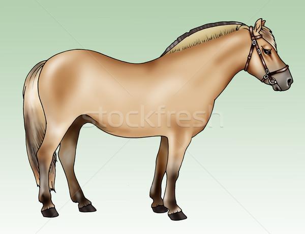 Pony breeds: Fjord Stock photo © fresh_7266481