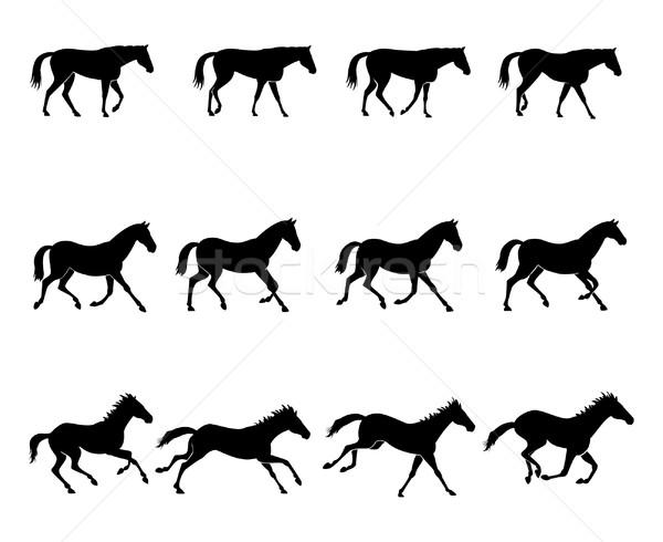 Horse gaits Stock photo © fresh_7266481