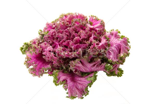 Rose floraison fraîches organique vert Photo stock © Freshdmedia