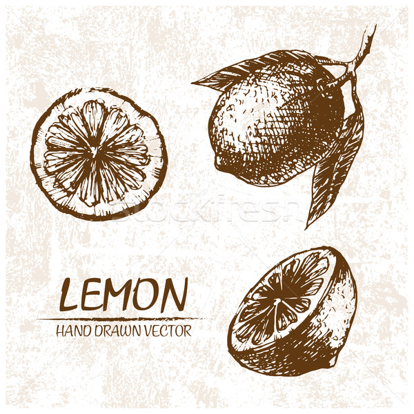 Digital vetor detalhado limão retro Foto stock © frimufilms