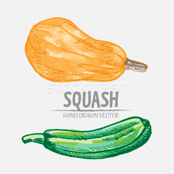 Numérique vecteur détaillée squash dessinés à la main couleur Photo stock © frimufilms