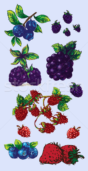 Stock photo: Digital vector detailed fruit hand drawn