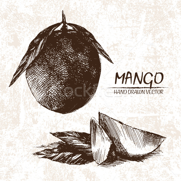 Digital vector detailed mango hand drawn Stock photo © frimufilms
