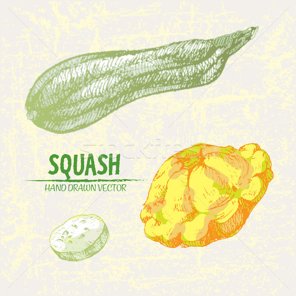 Digital vector detailed line art color squash Stock photo © frimufilms