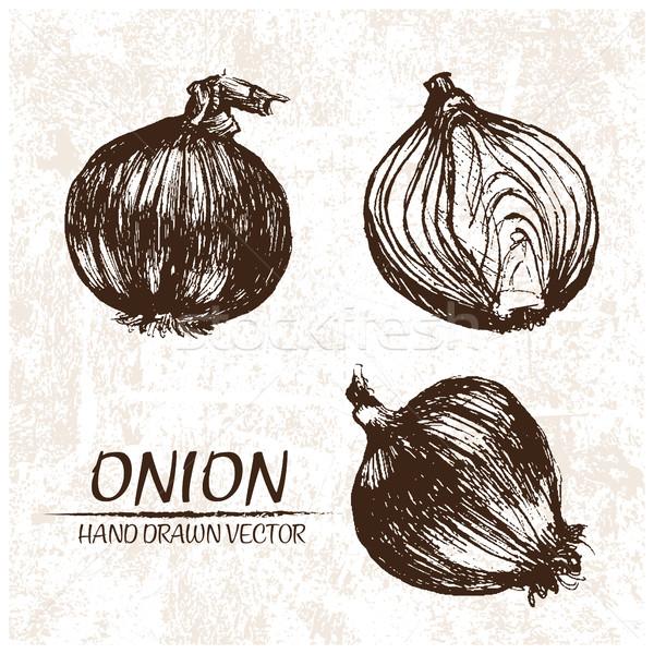 Digital vector detallado cebolla dibujado a mano retro Foto stock © frimufilms