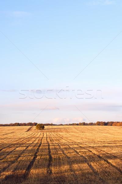 Nouvellement coupé automne village Moldavie Photo stock © frimufilms