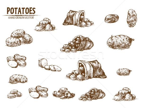Foto d'archivio: Digitale · vettore · dettagliato · line · arte · patate