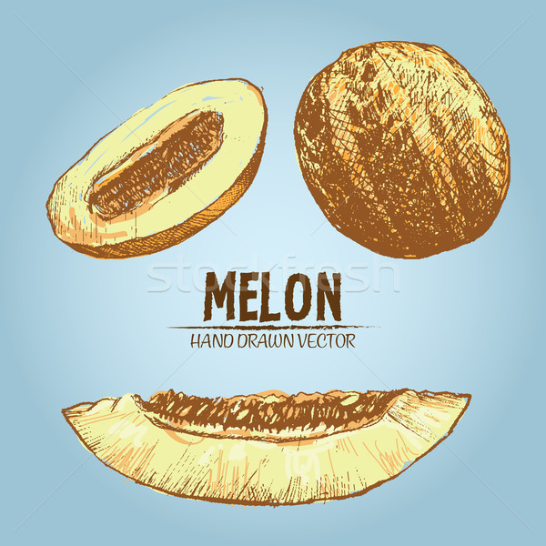 Digital vector detailed color melon hand drawn Stock photo © frimufilms