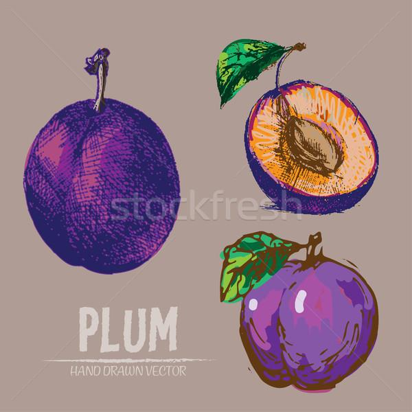 Stockfoto: Digitale · vector · gedetailleerd · kleur · pruim