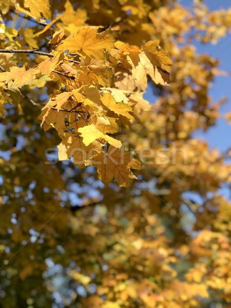 Daglicht Geel hemel bos Stockfoto © frimufilms