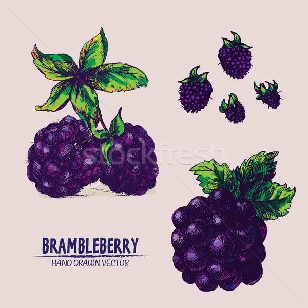 Digital vector detailed brambleberry Stock photo © frimufilms