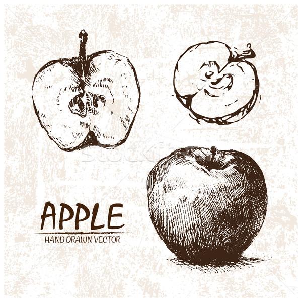 Stock photo: Digital vector detailed apple hand drawn