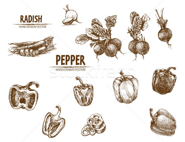 Digital vector detailed line art radish and pepper Stock photo © frimufilms