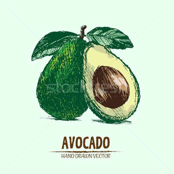 Stock photo: Digital vector detailed color avocado hand drawn