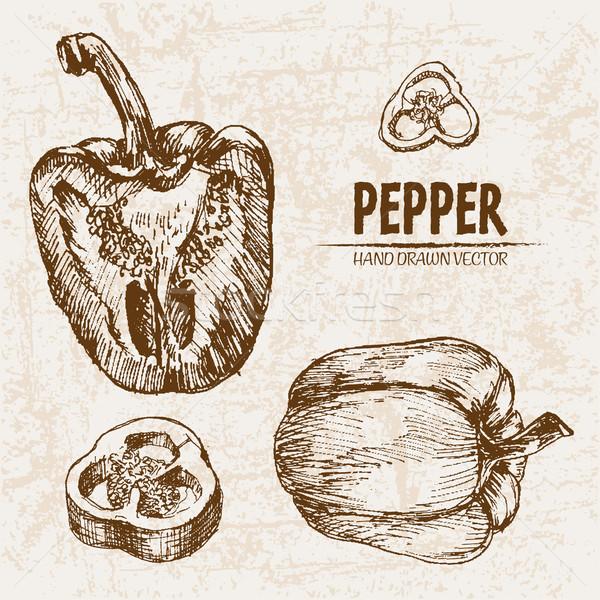 Digital vector detailed line art pepper vegetable Stock photo © frimufilms