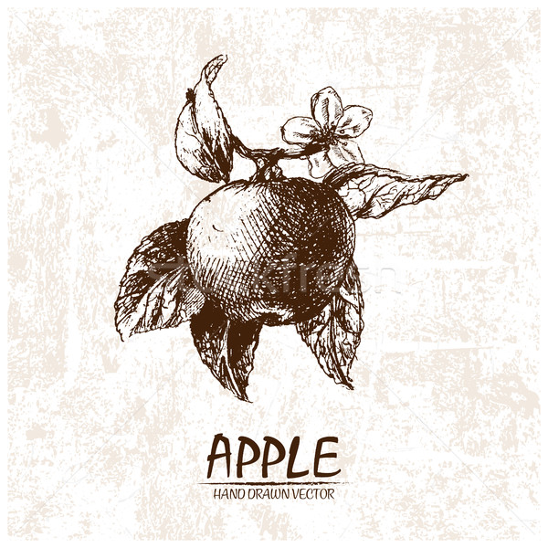 Digitale vector gedetailleerd appel retro Stockfoto © frimufilms