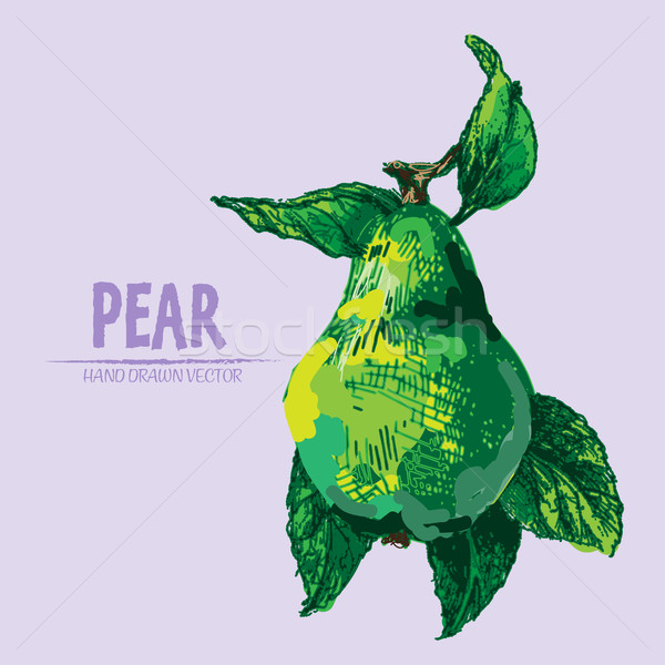 Stock photo: Digital vector detailed color pear hand drawn