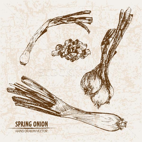 Digital vector detailed line art spring onion Stock photo © frimufilms
