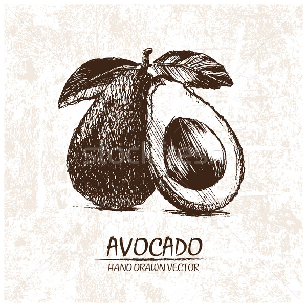 Digital vector detailed avocado hand drawn Stock photo © frimufilms