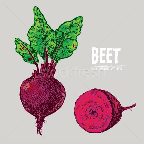 Digital vector detailed line art color beet Stock photo © frimufilms
