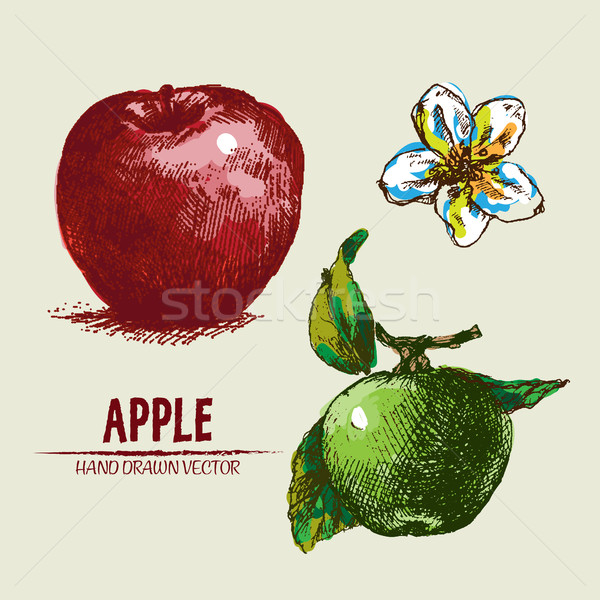 Stock photo: Digital vector detailed apple hand drawn