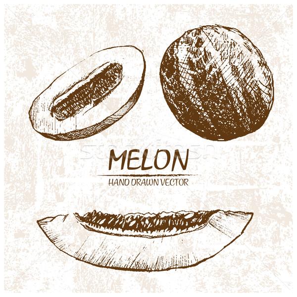 Digital vector detallado melón dibujado a mano retro Foto stock © frimufilms