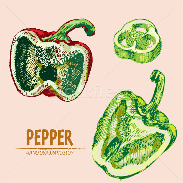 Digital vector detailed line art color pepper Stock photo © frimufilms