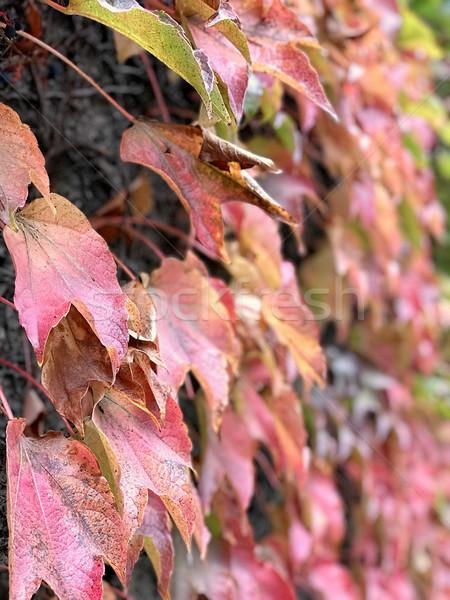 Stock foto: Schönen · Tageslicht · Seitenansicht · früh · Herbst · rot