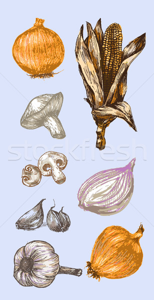 Stock photo: Digital vector detailed color vegetable hand drawn