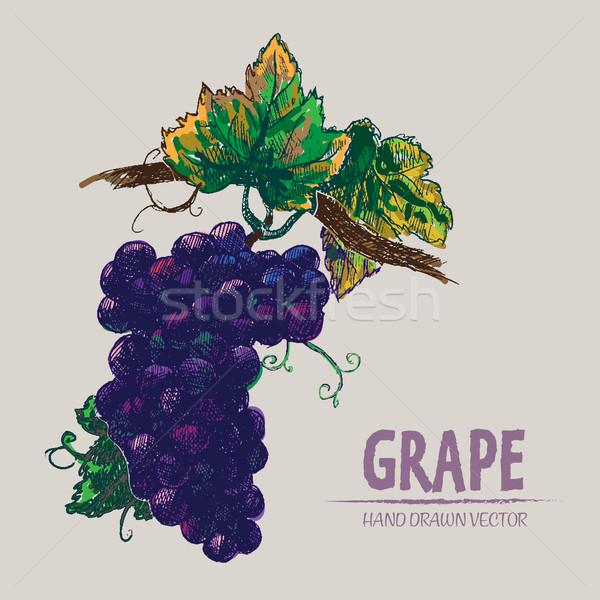 Stockfoto: Digitale · vector · gedetailleerd · kleur · druif