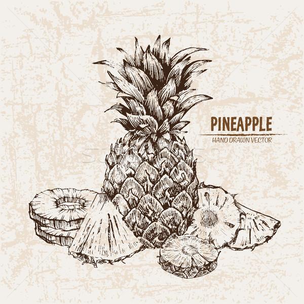Digital vetor detalhado linha arte ananás Foto stock © frimufilms